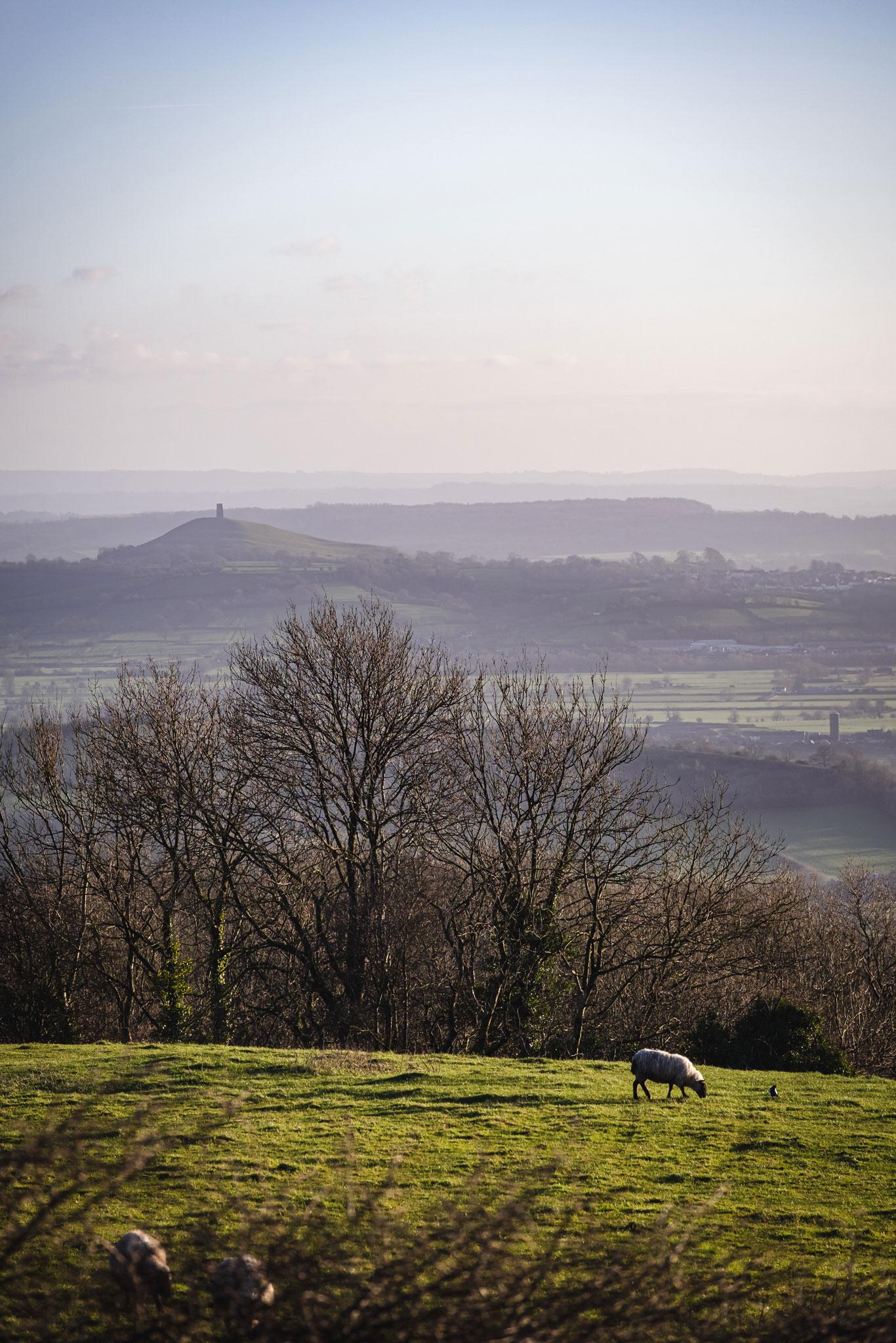 Glastonbury Tor from Deer Leap